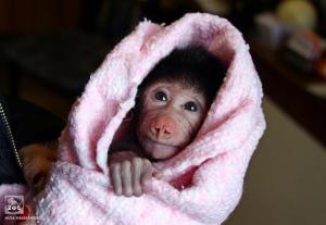 maimuni